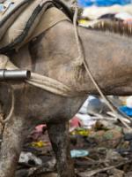 bamako Donkeys