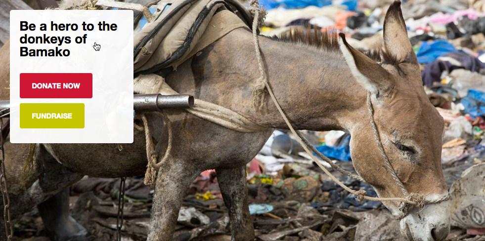 Bamako Donkey