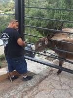 Mulholland Donkey Myka